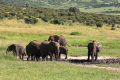 Faune dans Maasai Mara, Kenya Images libres de droits