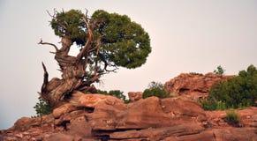 Faune de désert Image stock