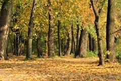 Faune de forêt Images stock