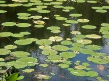 Faune de l'eau Image libre de droits