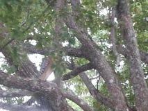 faune de la Floride Photo libre de droits