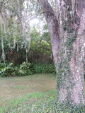 faune de la Floride Image libre de droits