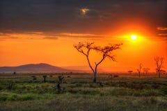 Faune de parc national de Serengeti image libre de droits