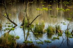 Faune marécageuse Santuary Photo libre de droits