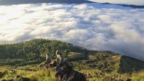 Faune sur le batur Bali de bâti image stock