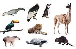 Faunor av Sydamerika Arkivbild