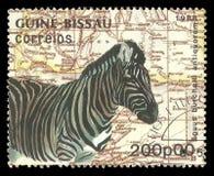 Faunor Damara Zebra Arkivfoton
