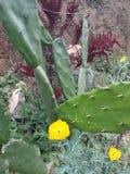 Faunor och flora Colombia Royaltyfri Bild