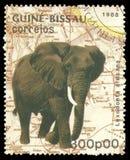 Fauny, Afrykański słoń Zdjęcia Royalty Free