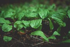 Fauny i flory w lesie obrazy royalty free