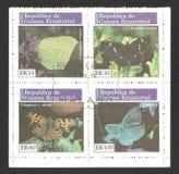 Fauny, przyroda, seria motyle Obraz Stock