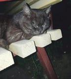 Fauny Ukraina Czarny kot kot śpi na żółtym drewnianym lavachke Zwierzę składał frontowe łapy pod głową, oczy jest obraz royalty free