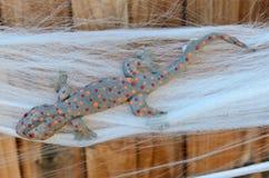 Fausse décoration de gecko de Halloween Tokay emprisonnée sur la toile d'araignée Photographie stock