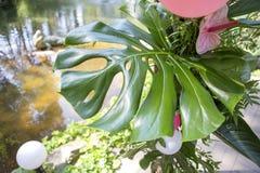 Fausse décoration rose de mariage de flamant avec des fleurs d'anthure et Image libre de droits