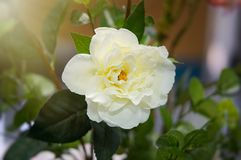Fausse fleur et fond floral Image stock