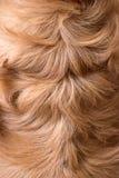 Fausse texture animale brune abstraite de fourrure Image stock