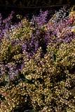 Fausses fleurs artificielles en vue photographie stock libre de droits
