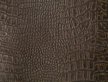 Faux alligator skin Stock Photos