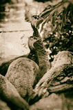 Faux antiqued beeld van pauwinnen weg kijkend Stock Afbeelding