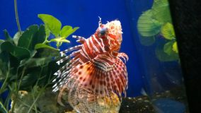 Faux Aquariums stock photos