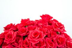 Faux de rose de rouge Photographie stock libre de droits