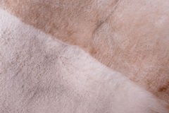 Faux fur Stock Photography