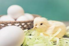 Faux jajka i kurczak Zdjęcie Royalty Free