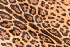 Faux leopard fur. Texture background Royalty Free Stock Image