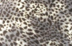 Faux modèle de fourrure de léopard photos stock