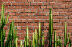 Faux pillar cactus with sharp spike and old red brick wall horiz. Ontal  image with copy space Royalty Free Stock Photos