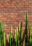 Faux pillar cactus with sharp spike and old red brick wall verti. Cal image with copy space Royalty Free Stock Image
