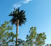 Faux Tree. Antenna disguised as Palm Tree Stock Image