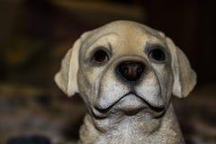 Fauxhund betrachtet aufmerksamen Blick der Kamera Lizenzfreie Stockfotos