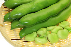 Fava bean Stock Photography
