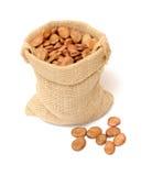 Fava bean Royalty Free Stock Photo