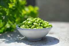 Fava Bean. A Chinese traditional food eat in the day of beginning of summer Royalty Free Stock Photos