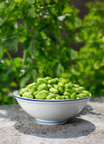 Fava Bean. A Chinese traditional food eat in the day of beginning of summer Stock Photography