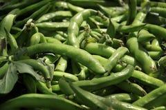 Fava Bean Pods stock photography