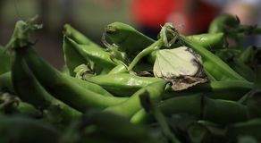Fava Bean Pods mit Blättern stockfotografie