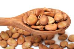Fava bean Royalty Free Stock Photography