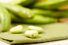 Free Fava Beans Stock Photo - 11394450
