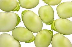 Fava beans Stock Photography