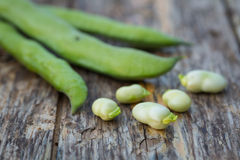 Fava beans Stock Images