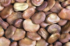 Fava beans,Vicia faba Stock Image