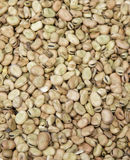 Fava beans,Vicia faba Stock Photo