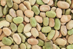 Fava (broad) bean Stock Photography