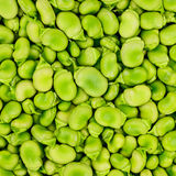 Fava or broad bean background or pattern. Stock Image