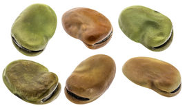 Fava (broad) bean isolated Royalty Free Stock Photos