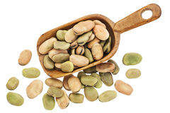Fava (broad) beans Stock Image