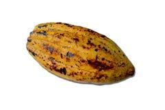 Fava di cacao isolata Fotografia Stock Libera da Diritti